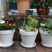 Planted Arrangements - Outdoors