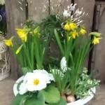 Planted Arrangements - Indoor